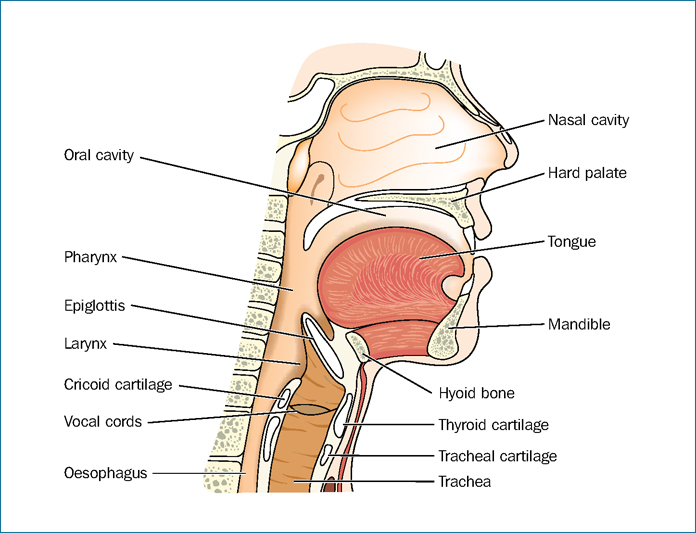 Airway Management In Odontogenic Infections Dentalnursing