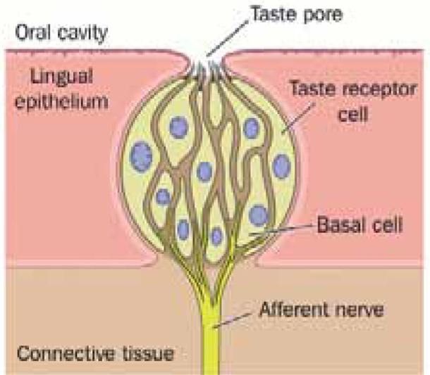 Tongue cleaning: all in the best possible taste - DentalNursing