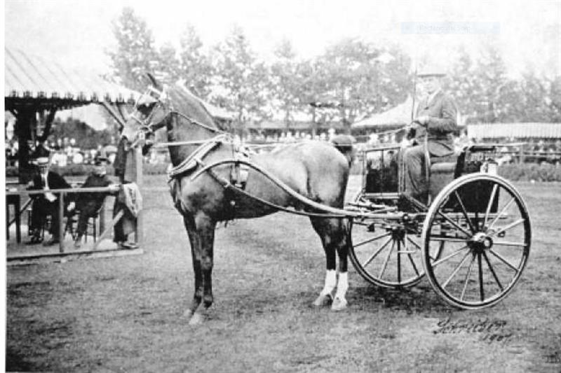 Forest King, star of the London Hackney Show 1901