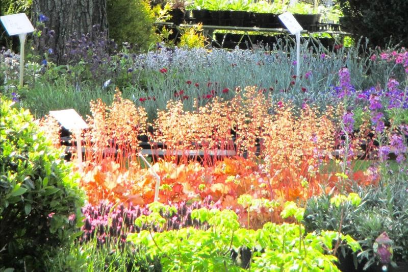 Specialist plant fairs and open gardens beckon
