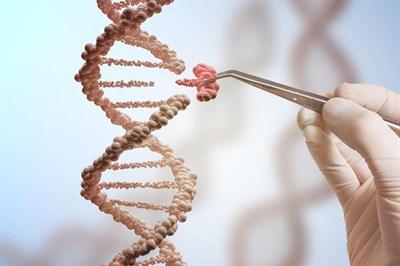 Scientist studying gene patterns