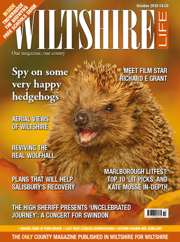 Spy on some very happy hedgehogs