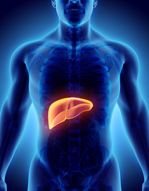 Spotting Early Liver Disease In Primary Care