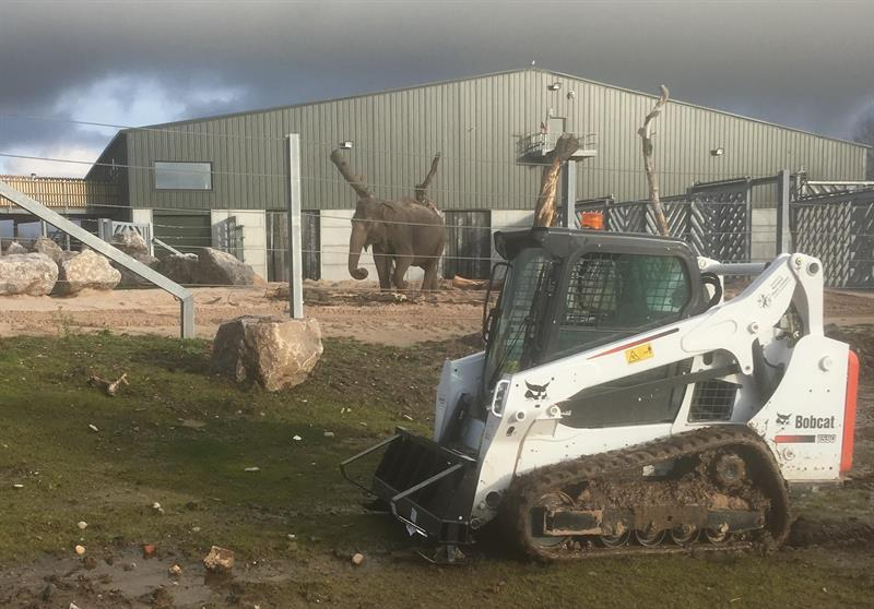 Bobcat track loader used for Blackpool Zoo elephant project