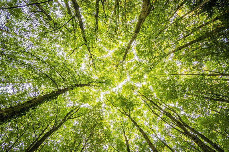 UK on track to miss upcoming environmental targets