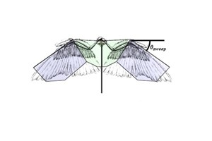 Comparison of bird wing with robotic wings.