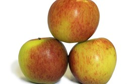 Apples lower drug intake